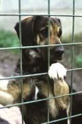 Co dělat při ztrátě a nálezu psa, fotka: ZTRNAL2.jpg